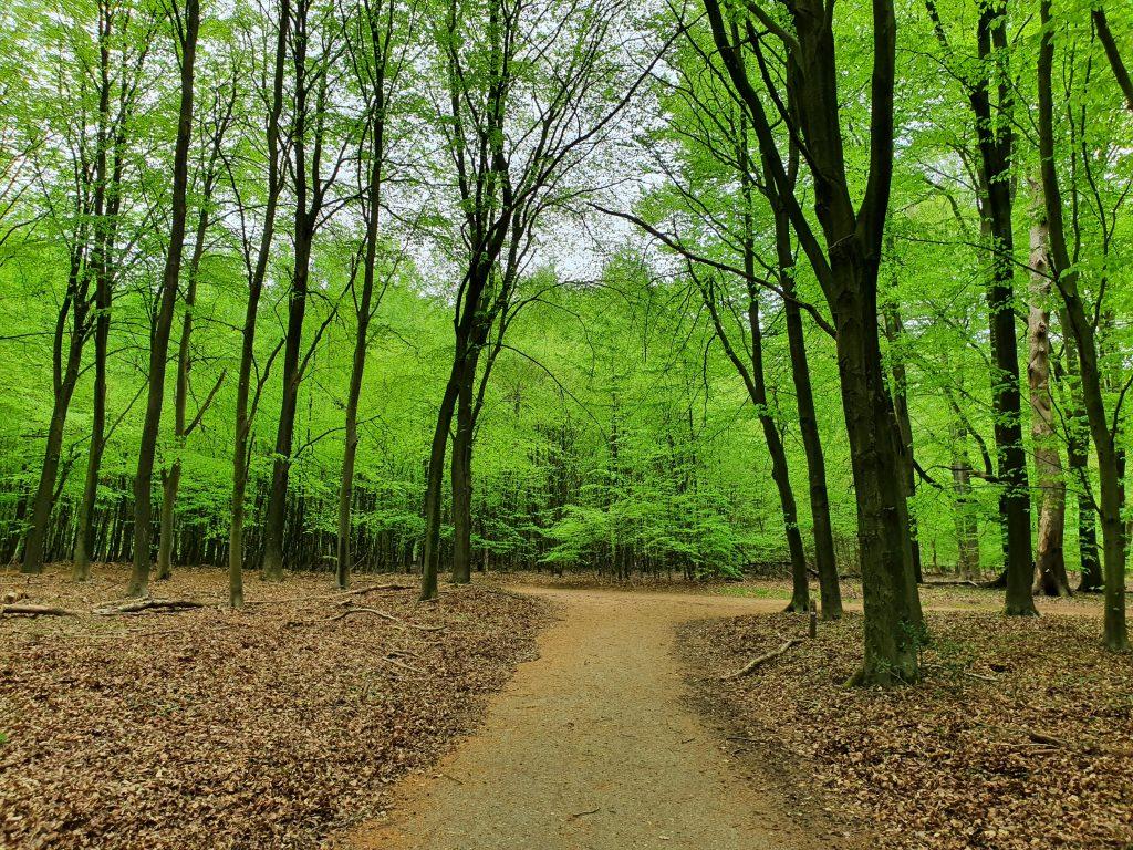 Wandelcoaching bos uitzichten Evelien Wieringa
